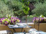 Petits déjeuners face au Luberon et aux lavandes